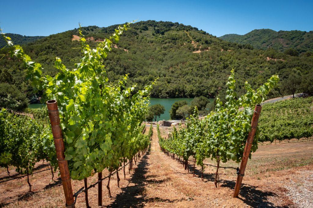 Alamitos Vineyards