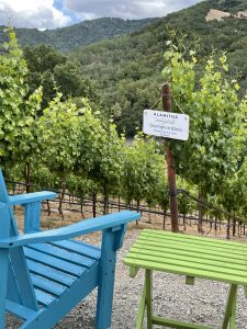 Visit - Wine Tasting